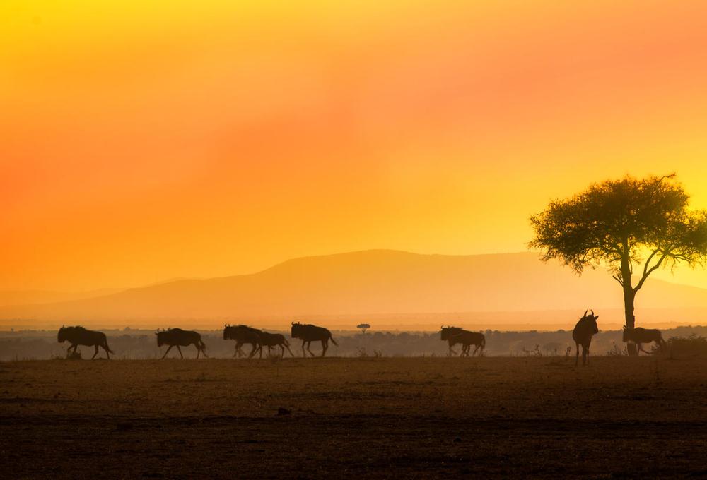 © Diana Rudenko  WWF - Small_WW2106435 (1)