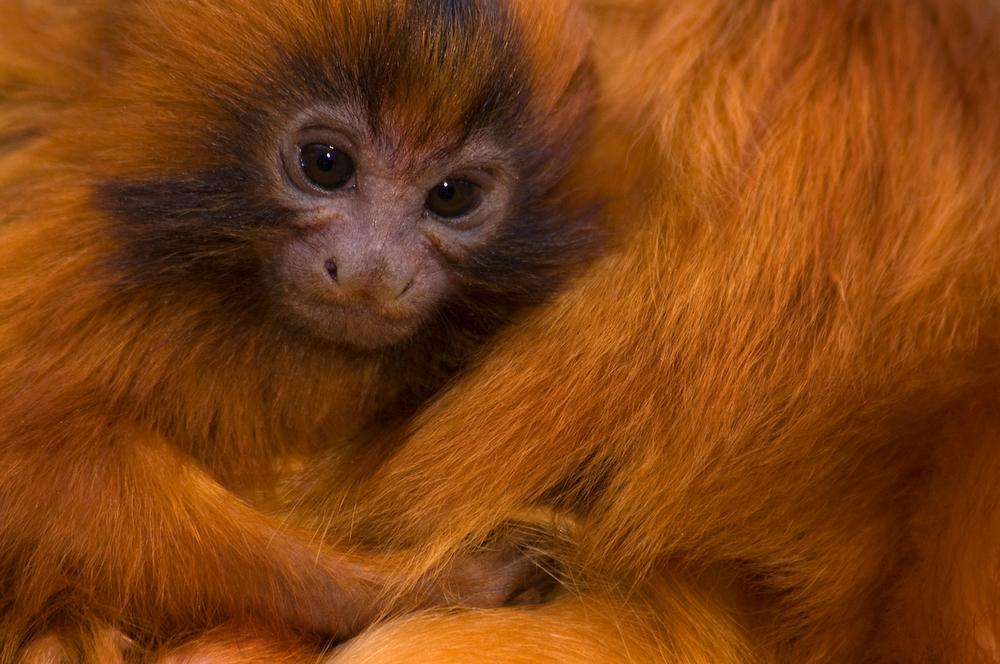© naturepl.com  Edwin Giesbers  WWF - Small_WW22372
