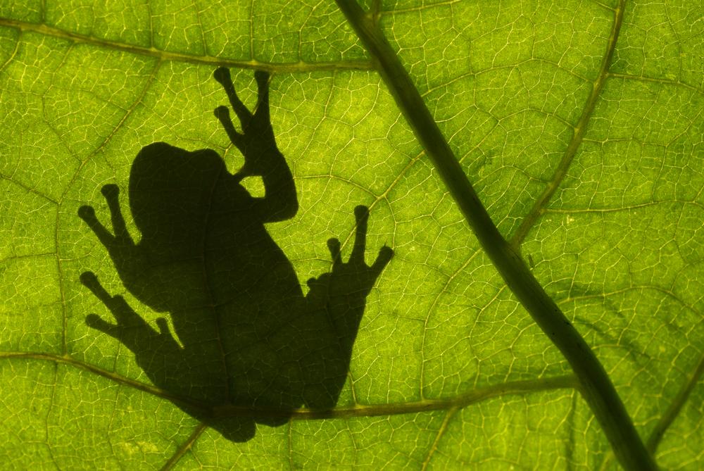 © naturepl.com  Edwin Giesbers  WWF - Small_WW22461