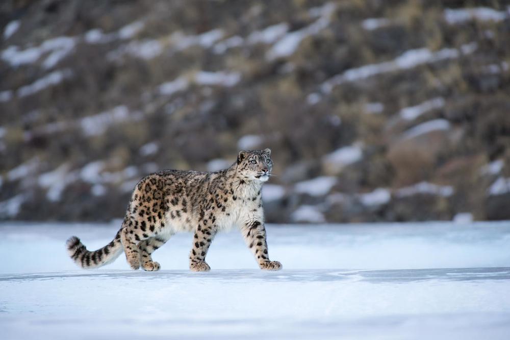 © naturepl.com  Valeriy Maleev  WWF - Small_WW2131498